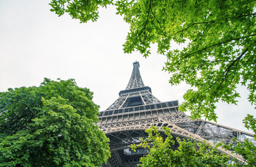 Wall Mural - La Tour Eiffel in Paris surrounded by trees in summer