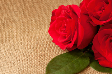 Background with three bright roses