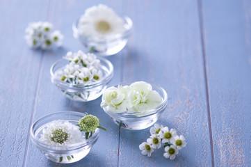 白い花 白 ホワイト フラワー お花