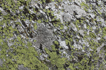 Felswand grün