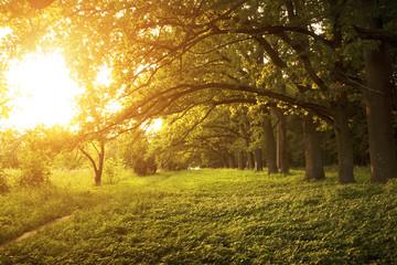 Avenue of oak