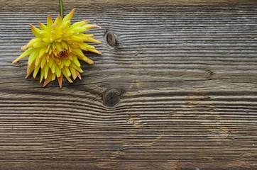 Holz Hintergrund Blume