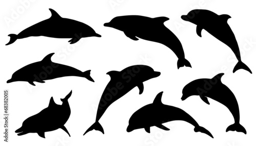 dolphin silhouettes stock image and royalty free vector files on