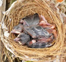 bird in the nest