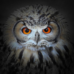 Fototapete - The evil eyes. The Eagle Owl, Bubo bubo.