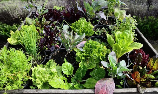 Vegetable garden with assortment vegetables and container