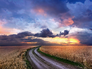 Dirt road in the middle of a wheat field