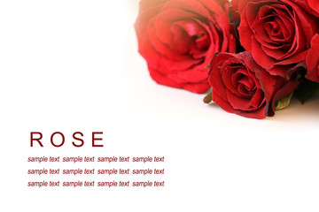 Red roses bouquet on white background, greeting card.