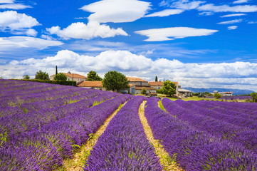 Photo sur Aluminium Prune Feelds of blooming lavander, Valensole, Provence, France, europe