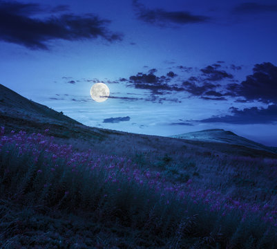 high wild flowers at the mountain top at night