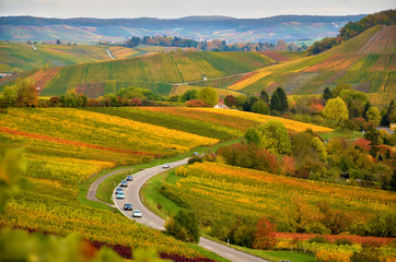 Germany autumn landscape with the view on vineyards