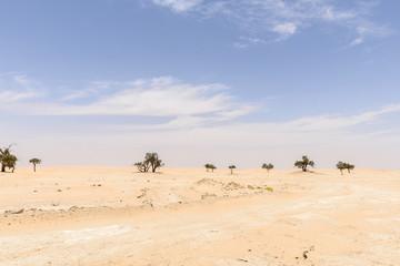 Trees among sand dunes in Rub al-Khali desert (Oman)