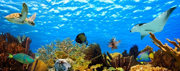 Spoed Fotobehang Koraalriffen underwater panorama of a tropical reef in the caribbean