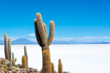 Cactus and Salt