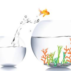Fish Jump To The Big Aquarium Buy This Stock Photo And Explore