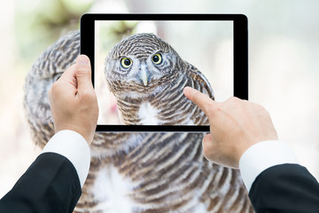 Businessman hands tablet taking pictures close up of an owl