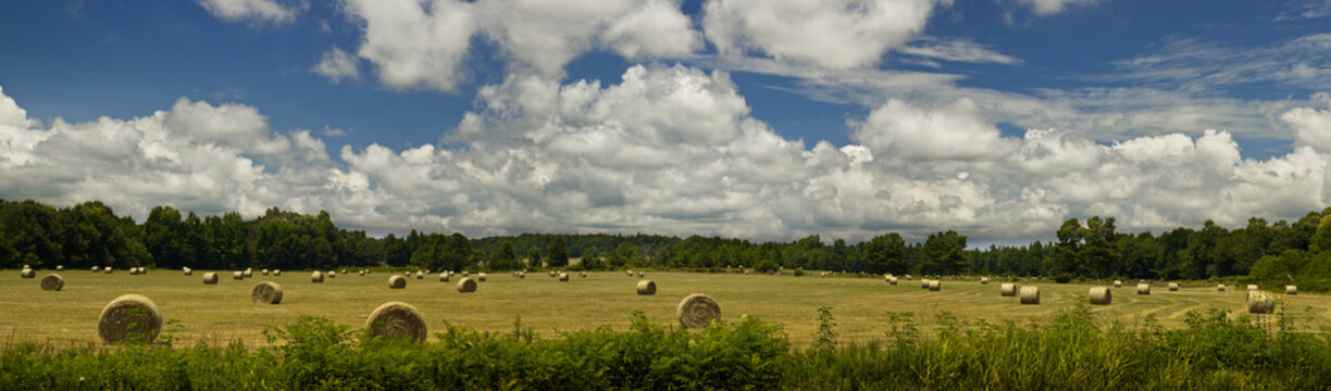 Hay in Field Panorama