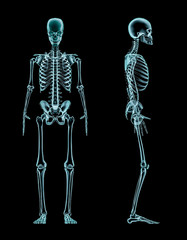 Male skeleton full body x-ray