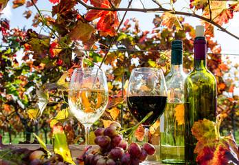 Fototapete - Pfälzer Weinprobe :)