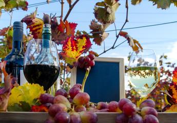 Fototapete - Weinprobe in Pfälzer Wingert :)