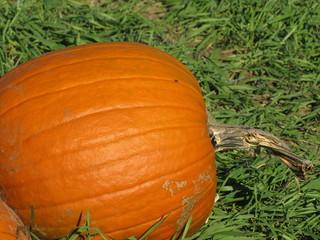a pumpkin on its side sitting in a field of green grass