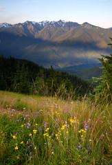 Wall Mural - Wildflowers Cover Hillside Olympic Mountains Hurricane Ridge