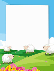 Sheeps Banner