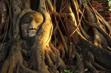 Buddha image in the tree