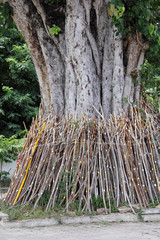 Bodhi tree pole support