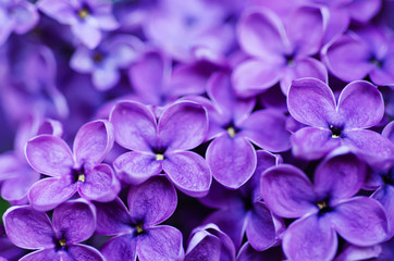 Foto op Aluminium Lilac Lilac flowers background