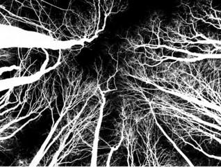 Weiße Bäume