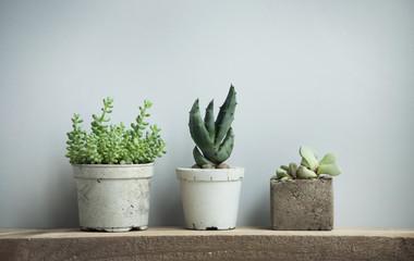 succulents in diy concrete pots in scandinavian home decor