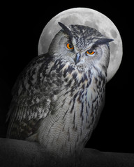 Fototapete - The Eagle owl (Bubo Bubo) and moon.
