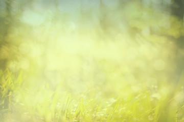 green abstract springtime and fresh background grass and glitter