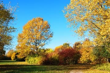 Printed kitchen splashbacks Autumn Autumn Landscape. Beautiful autumn trees.