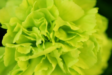 Blurred green flower. Abstract background.