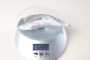 Fisch auf einer Kuechenwaage