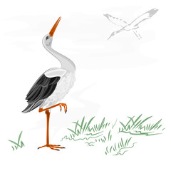 Storks white wild water bird vector illustration