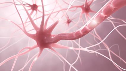Nervenzellen, Myelinscheide, Neuronen - 3D Illustration