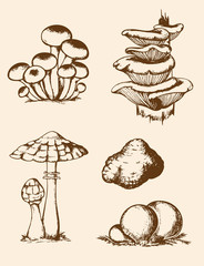 Vintage hand drawn forest mushrooms