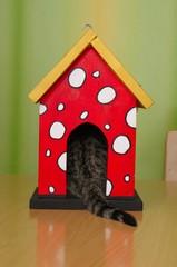 Katze sitzt im Vogelhaus