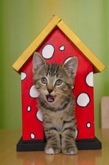 Europäische Hauskatze steht im Vogelhaus
