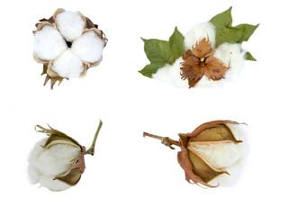 cotton collage