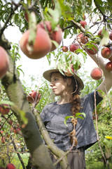 young farmer woman who gathers peaches from tree