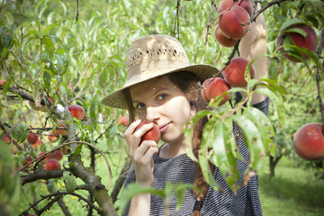 farmer woman who sniff a fresh peach from tree