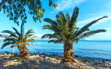 Palm tree on summer beach (Greece)
