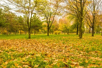 Cloudy day in the autumn park