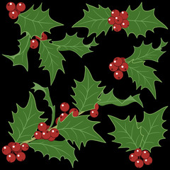 Holly sprigs for Christmas decorations  isolated
