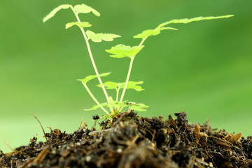 green seedling on ground.