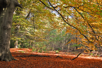 Aluminium Prints Nature Grote boom in de herfst.